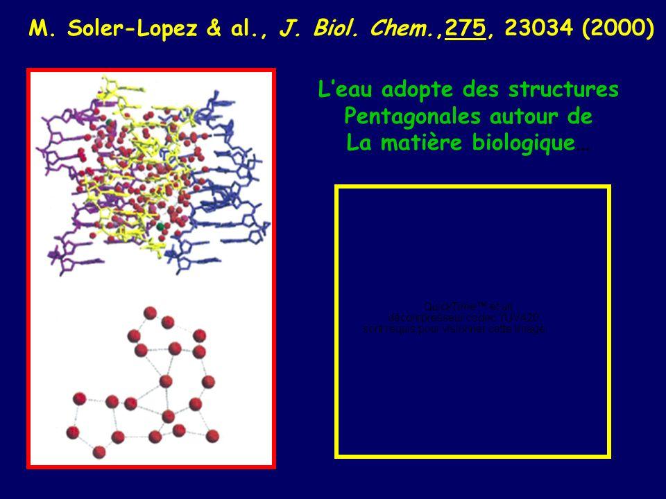 M. Soler-Lopez & al., J. Biol. Chem.,275, 23034 (2000)