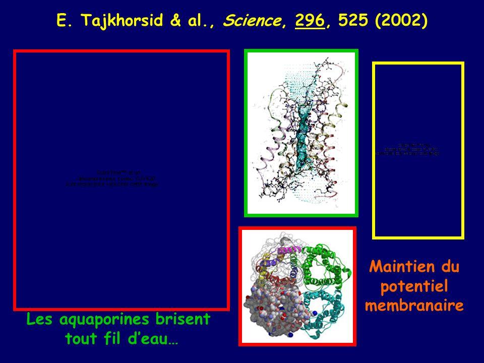 E. Tajkhorsid & al., Science, 296, 525 (2002) Les aquaporines brisent