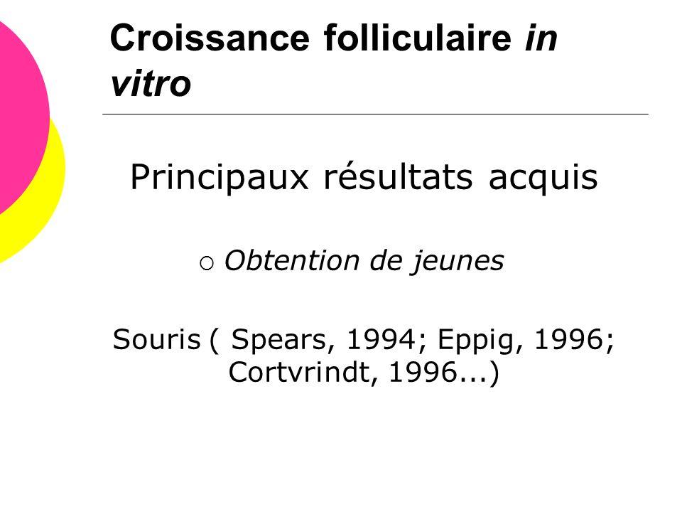 Croissance folliculaire in vitro