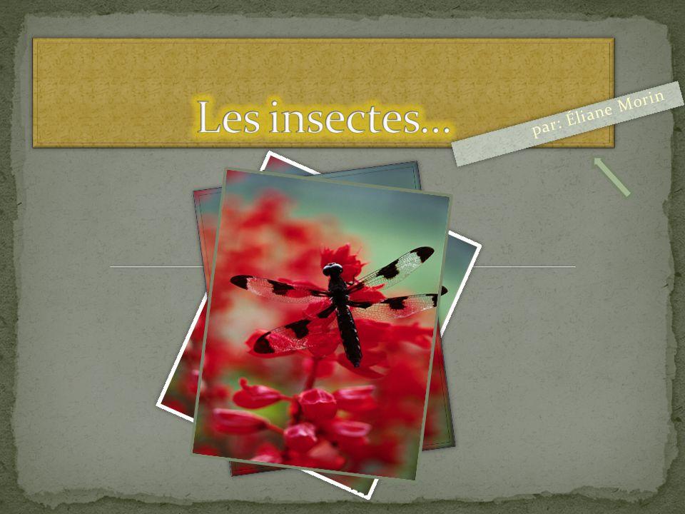 Les insectes… par: Éliane Morin