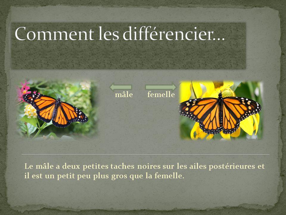 Comment les différencier…