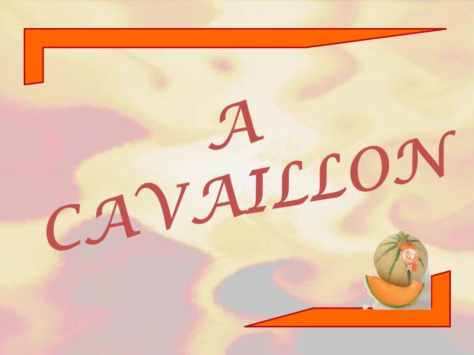 A CAVAILLON