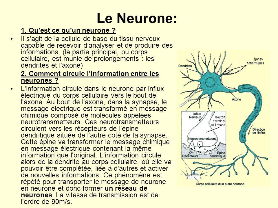 Le Neurone: 1. Qu est ce qu un neurone