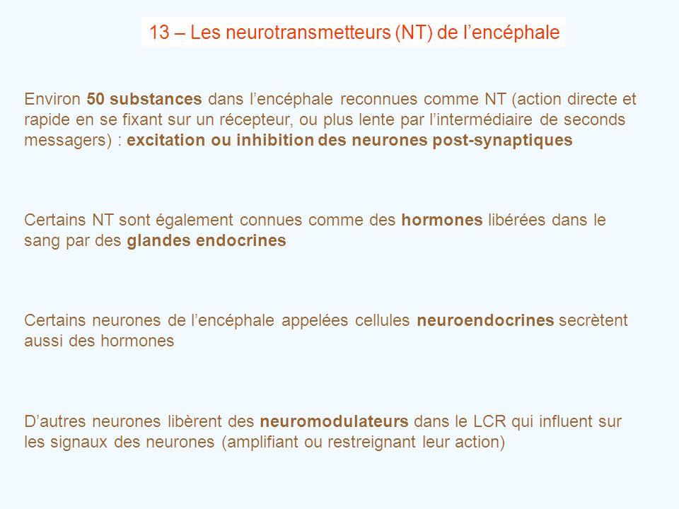 13 – Les neurotransmetteurs (NT) de l'encéphale