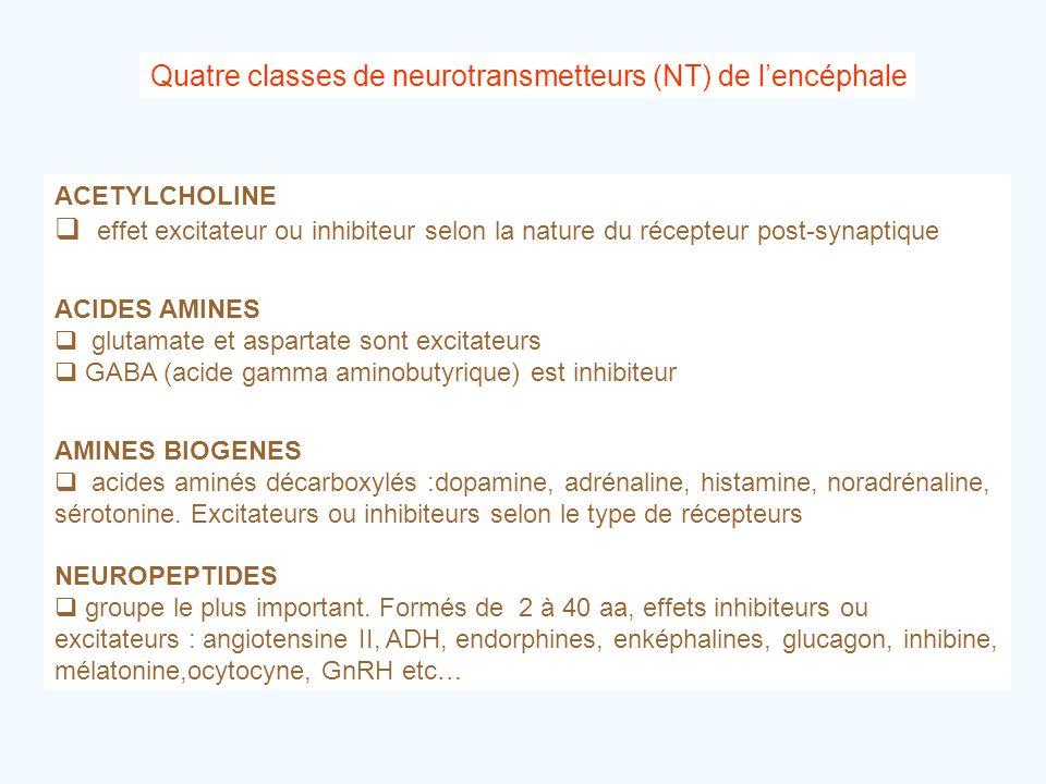 Quatre classes de neurotransmetteurs (NT) de l'encéphale