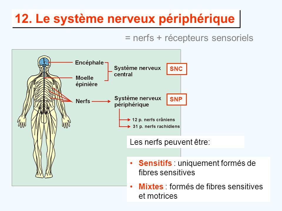 12. Le système nerveux périphérique