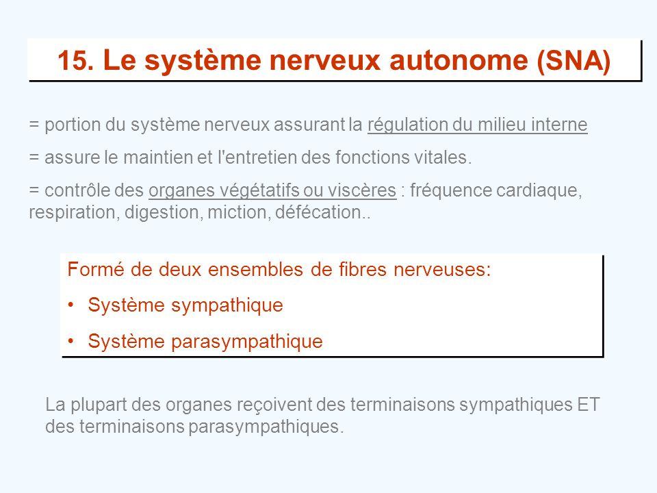 15. Le système nerveux autonome (SNA)