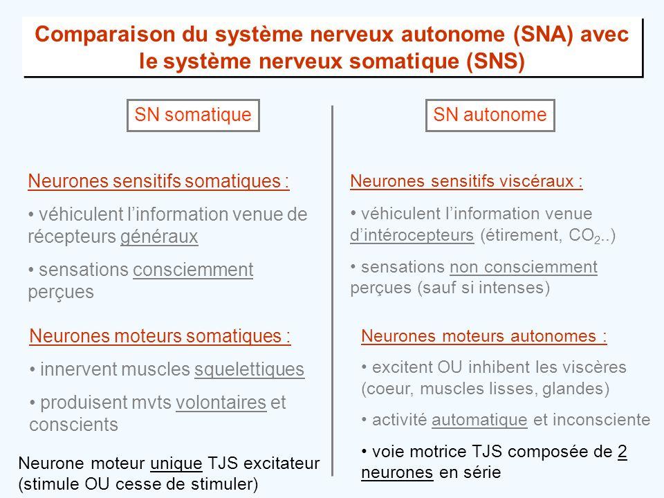 Comparaison du système nerveux autonome (SNA) avec le système nerveux somatique (SNS)