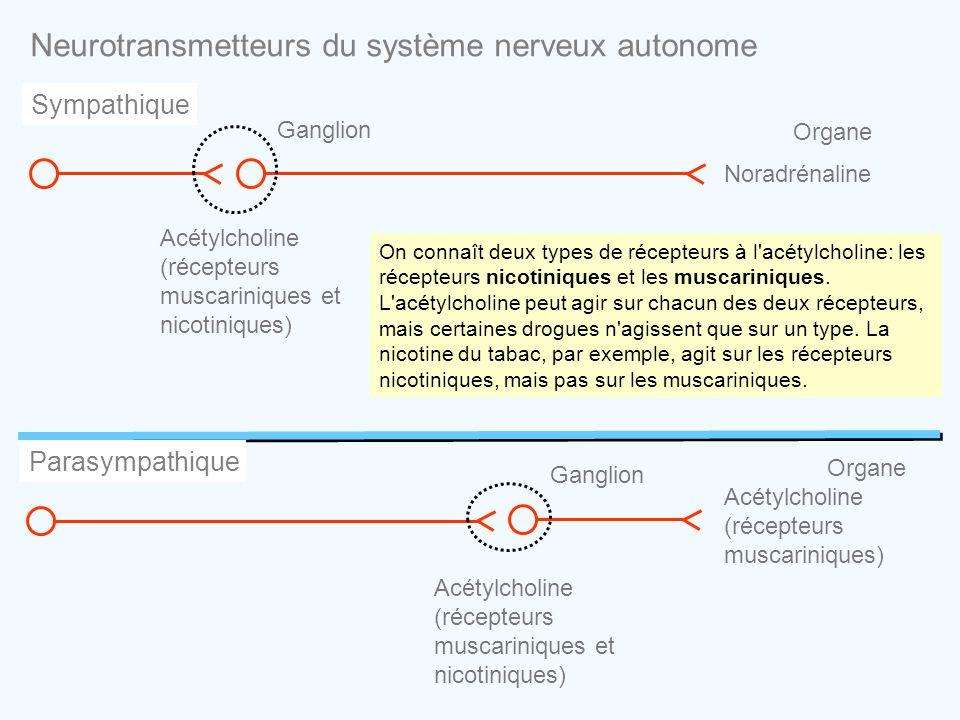 Neurotransmetteurs du système nerveux autonome