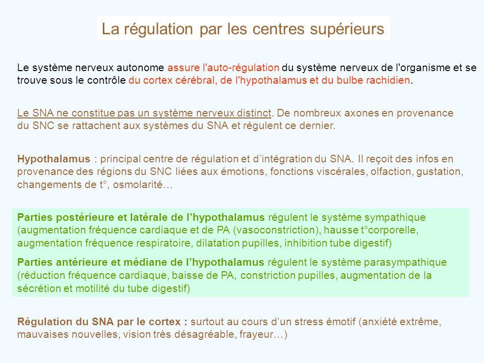 La régulation par les centres supérieurs