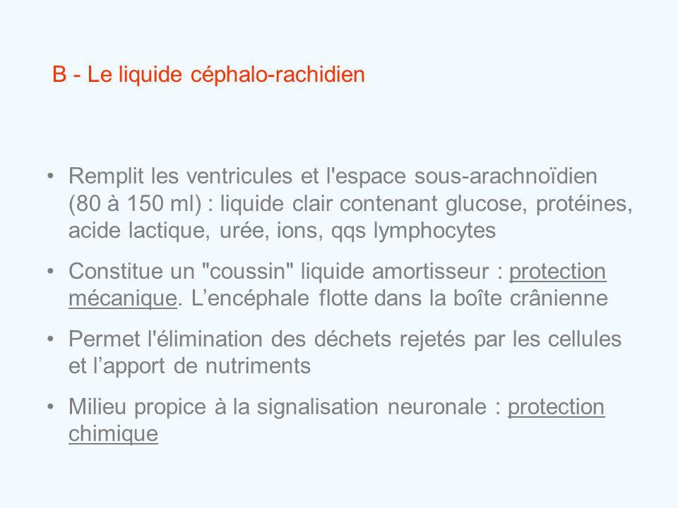 B - Le liquide céphalo-rachidien