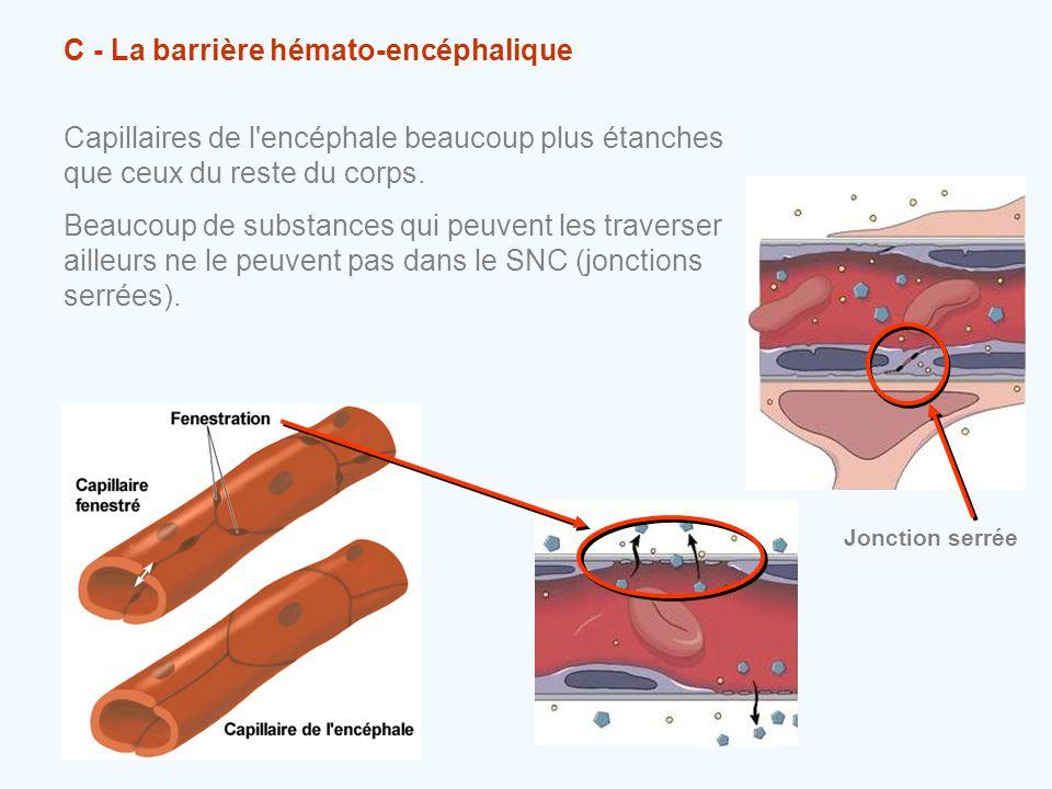 C - La barrière hémato-encéphalique