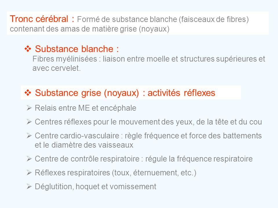 Substance grise (noyaux) : activités réflexes
