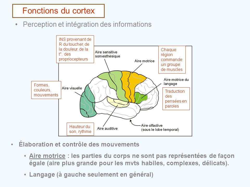 Fonctions du cortex Perception et intégration des informations