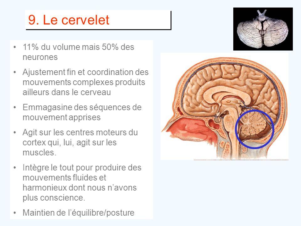 9. Le cervelet 11% du volume mais 50% des neurones