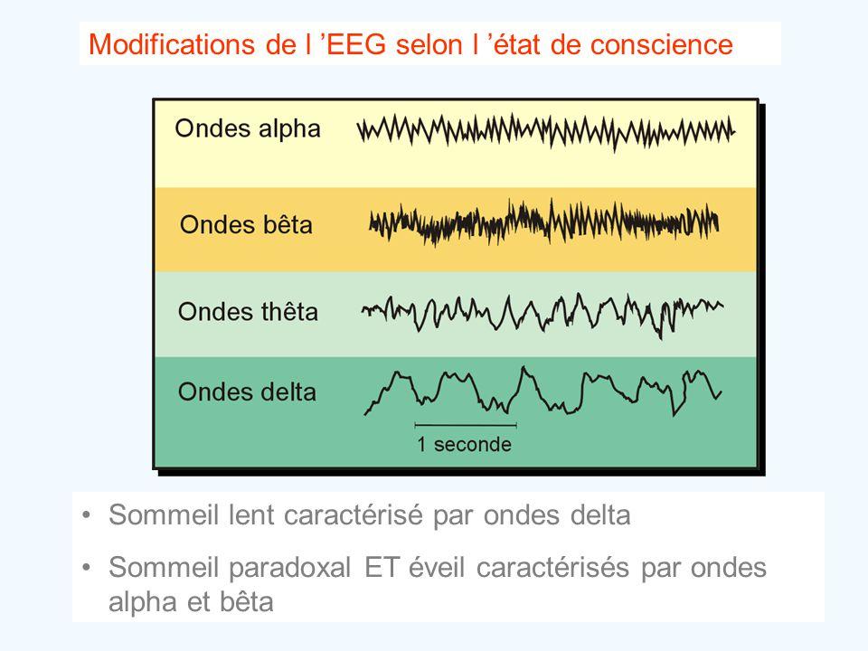 Modifications de l 'EEG selon l 'état de conscience