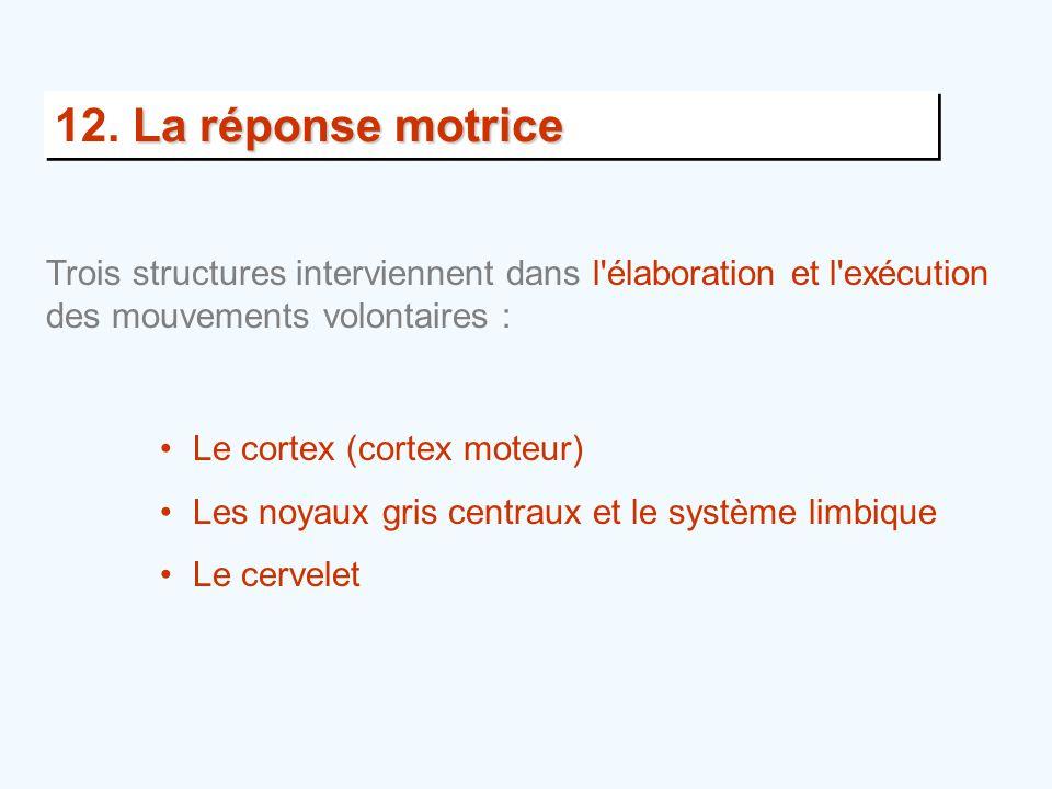 12. La réponse motrice Trois structures interviennent dans l élaboration et l exécution des mouvements volontaires :