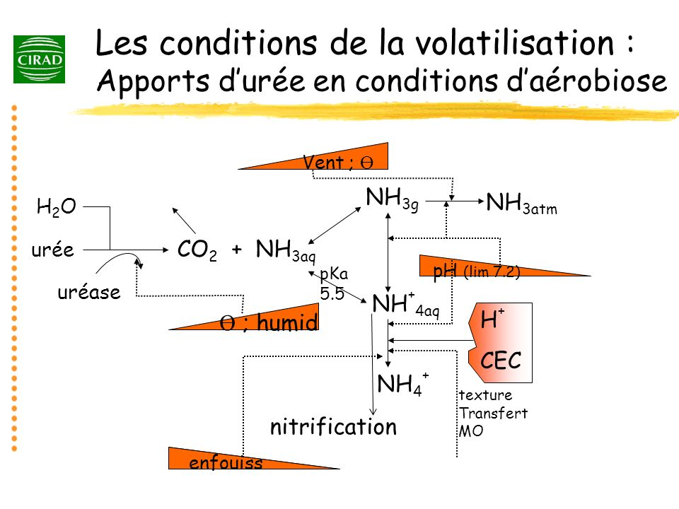 Les conditions de la volatilisation : Apports d'urée en conditions d'aérobiose