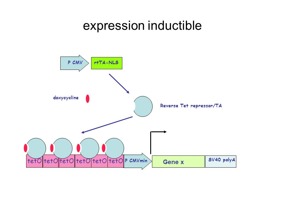 expression inductible