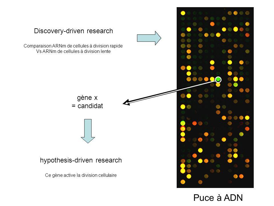 Puce à ADN Discovery-driven research gène x = candidat