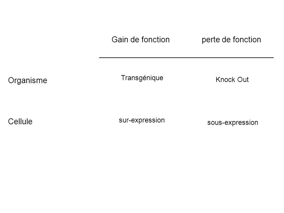 Gain de fonction perte de fonction Organisme Cellule Transgénique