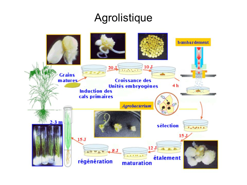 Agrolistique