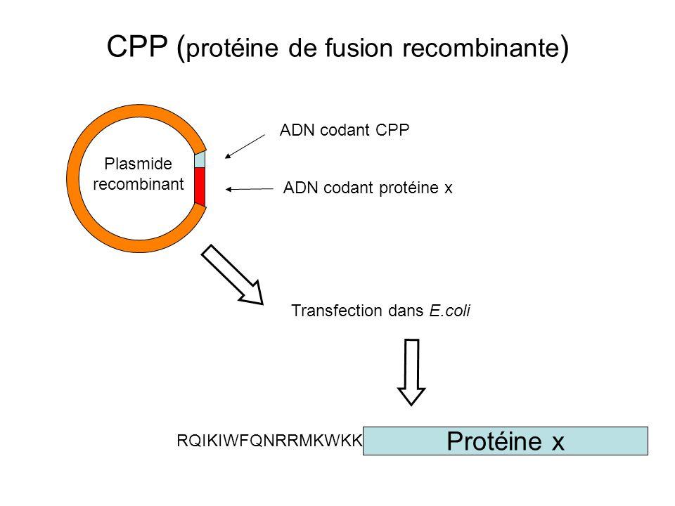 CPP (protéine de fusion recombinante)