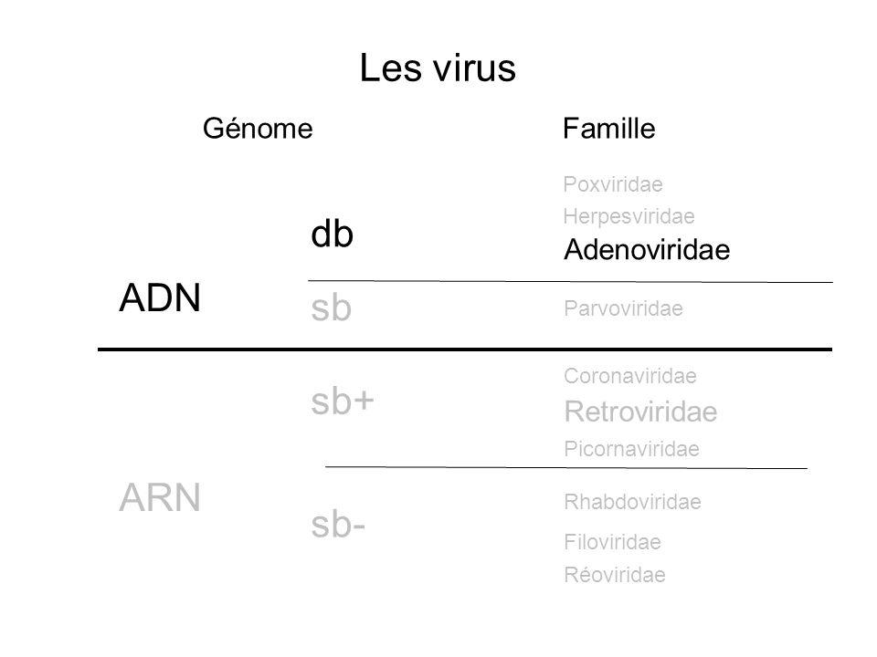 Les virus db ADN sb sb+ ARN sb- Génome Famille Adenoviridae