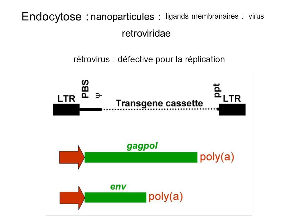 rétrovirus : défective pour la réplication