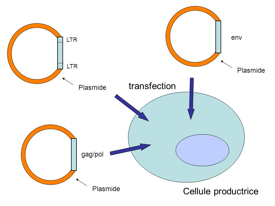 Plasmide LTR gag/pol env transfection Cellule productrice