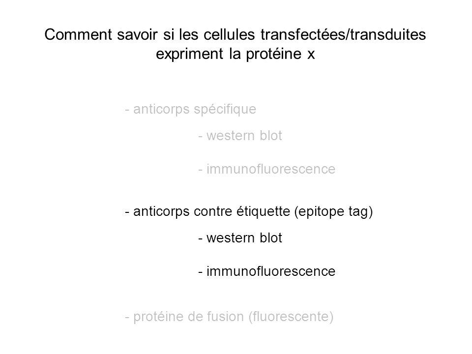 Comment savoir si les cellules transfectées/transduites