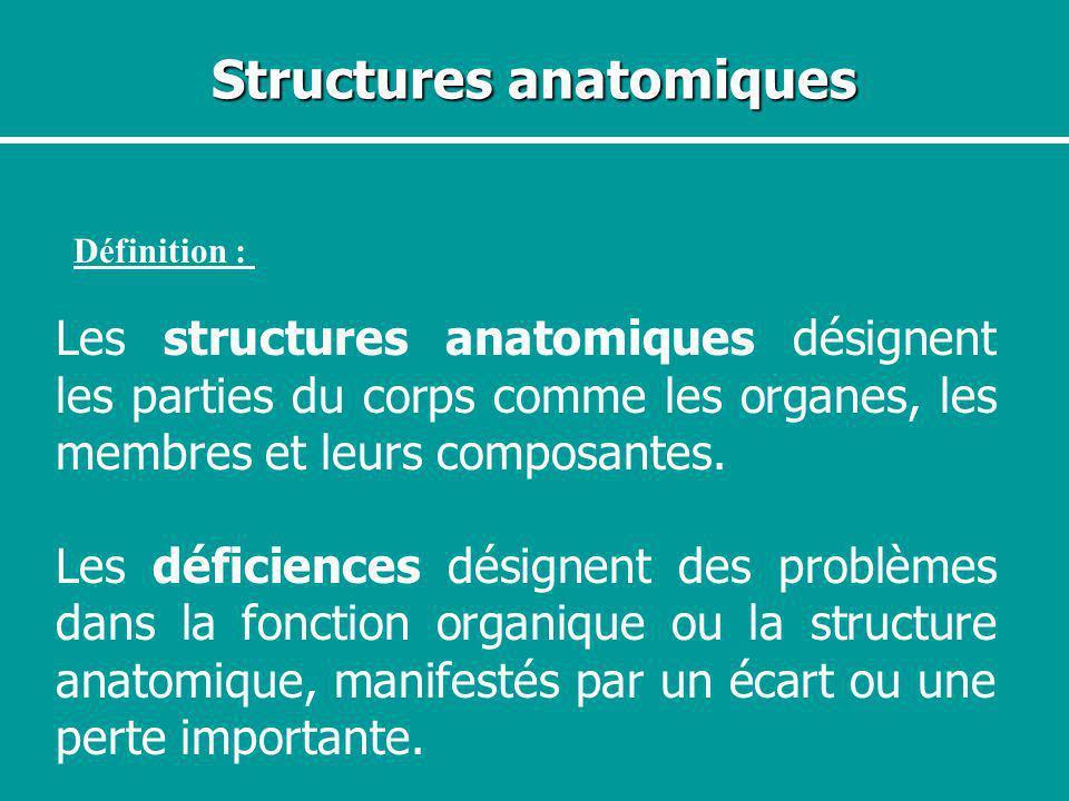 Structures anatomiques