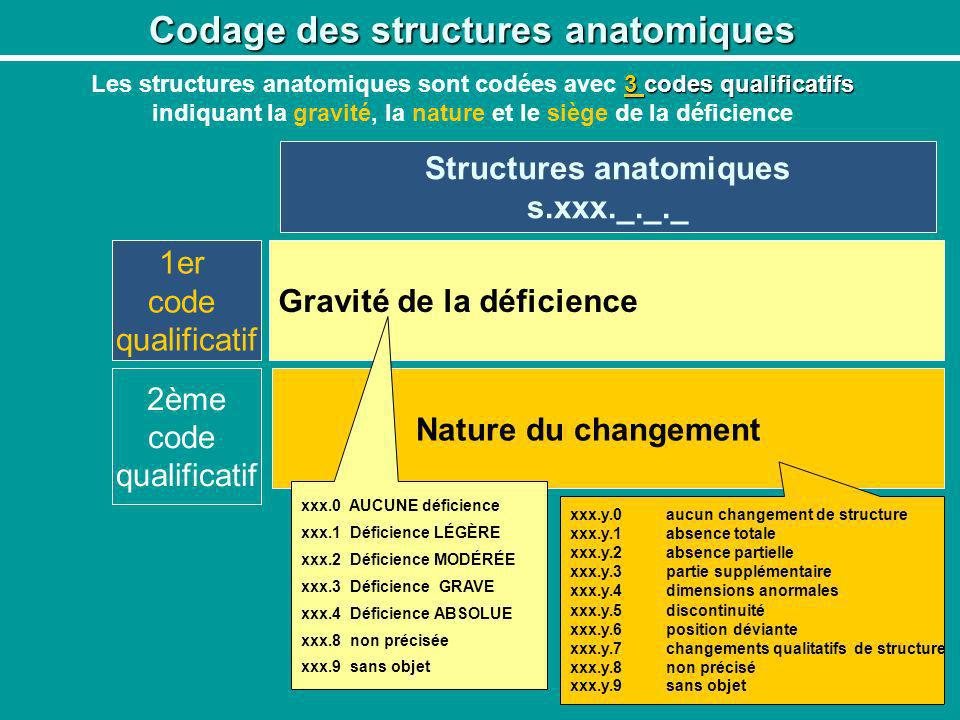 Codage des structures anatomiques