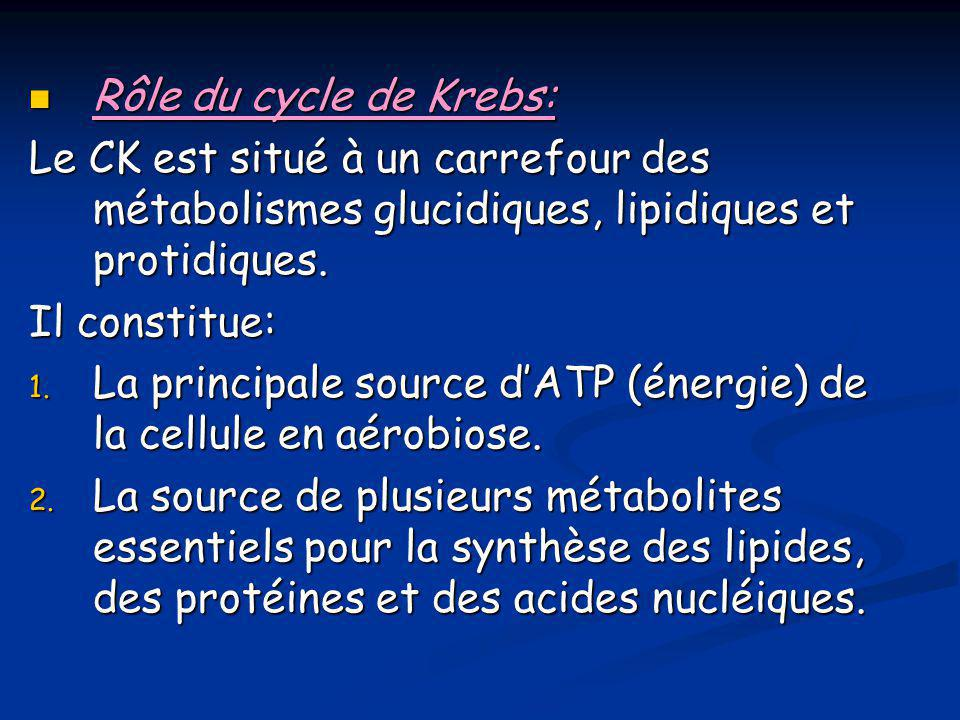 Rôle du cycle de Krebs: Le CK est situé à un carrefour des métabolismes glucidiques, lipidiques et protidiques.