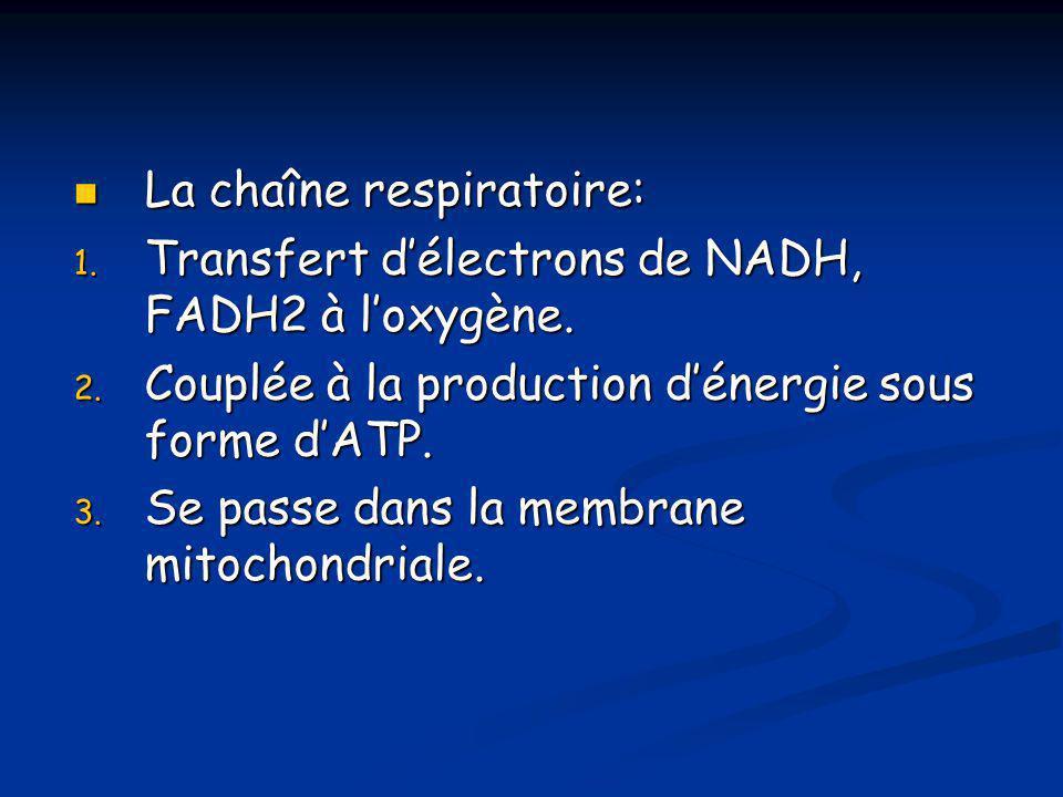 La chaîne respiratoire: