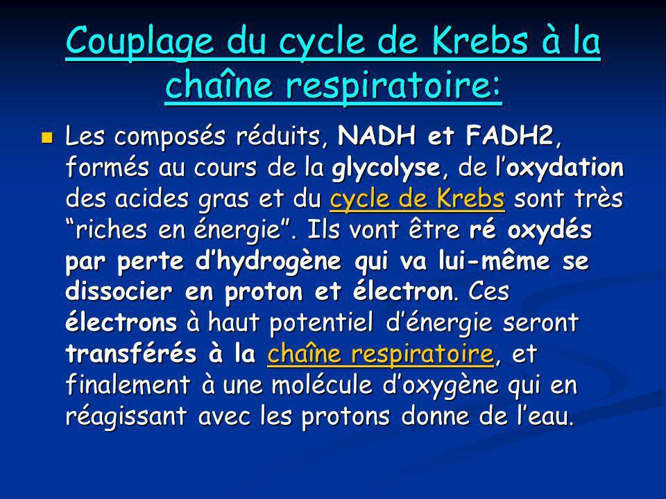 Couplage du cycle de Krebs à la chaîne respiratoire: