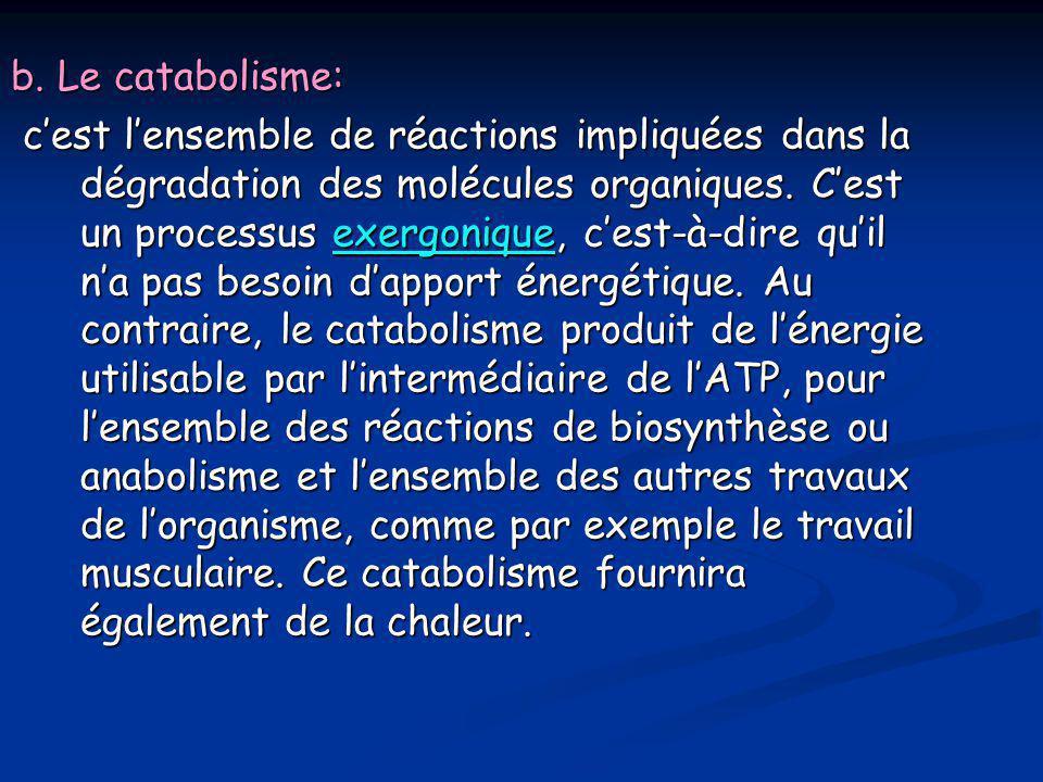 b. Le catabolisme: