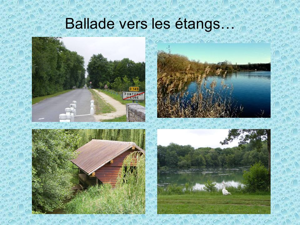 Ballade vers les étangs…