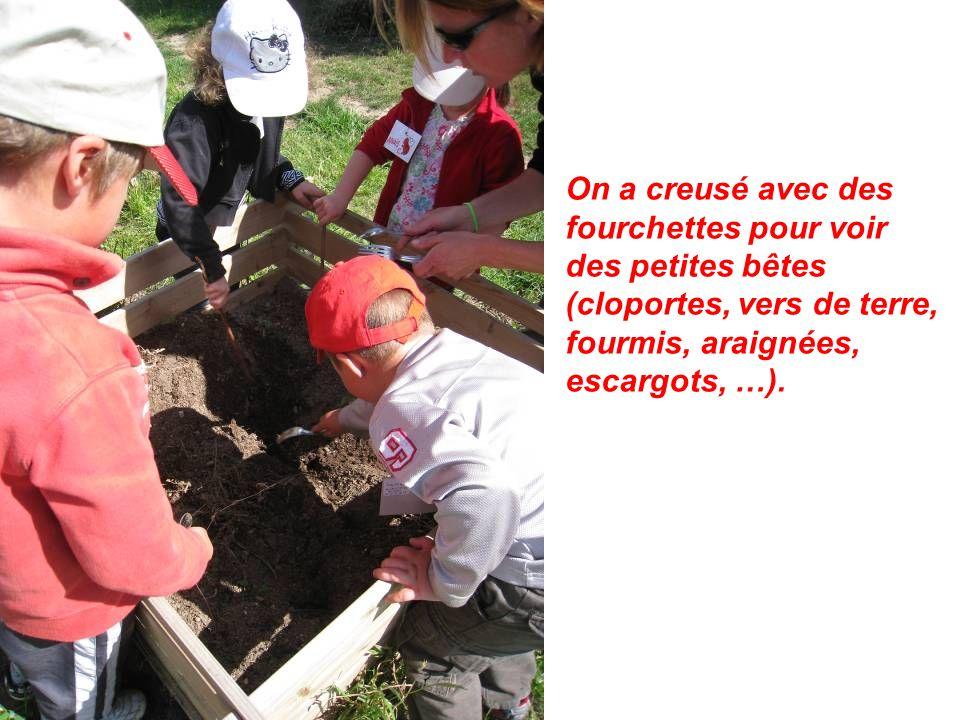 On a creusé avec des fourchettes pour voir des petites bêtes (cloportes, vers de terre, fourmis, araignées, escargots, …).