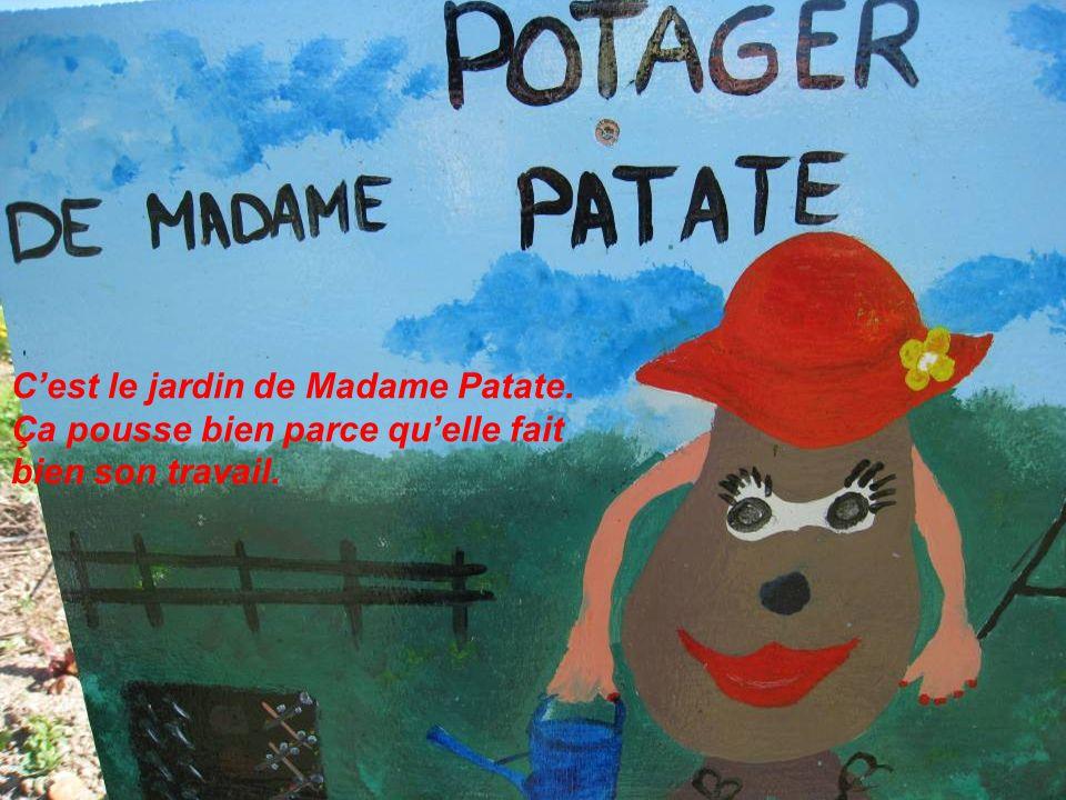 C'est le jardin de Madame Patate.