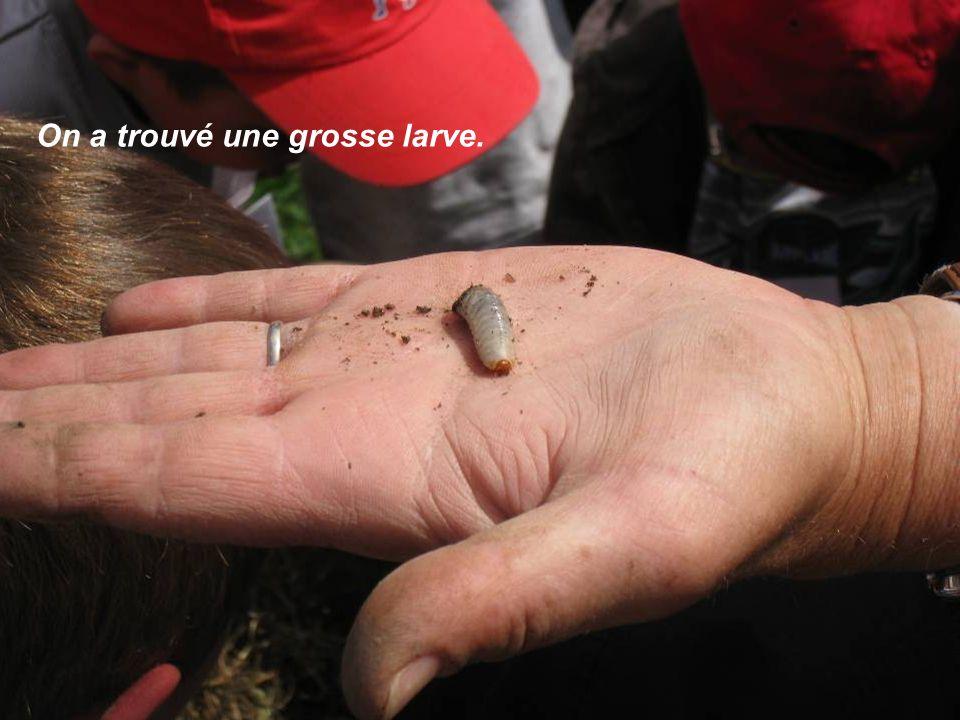 On a trouvé une grosse larve.