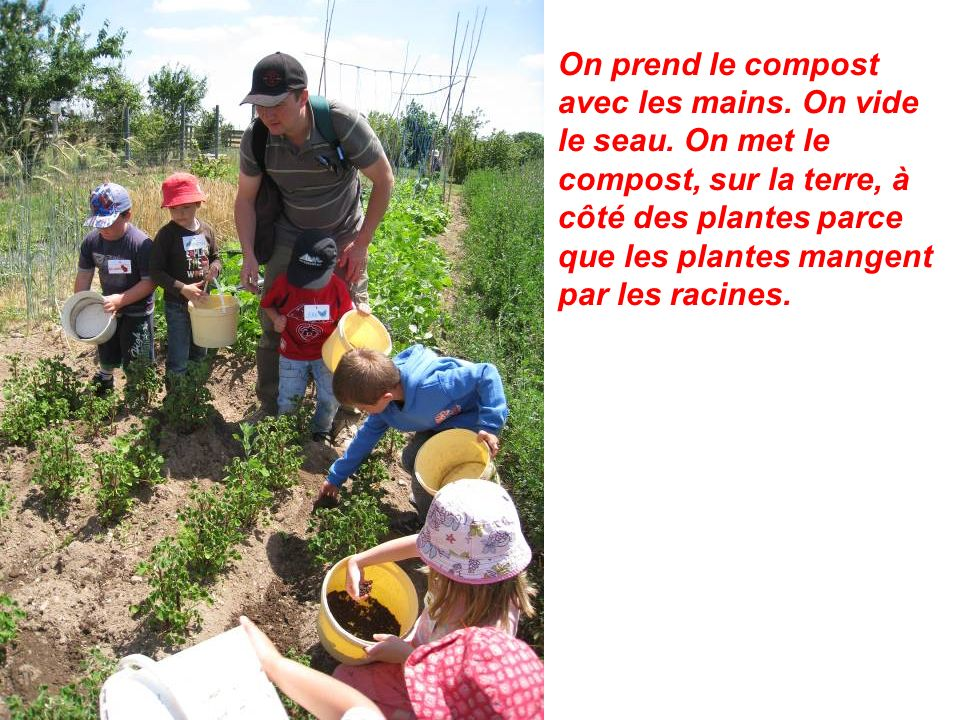 On prend le compost avec les mains. On vide le seau