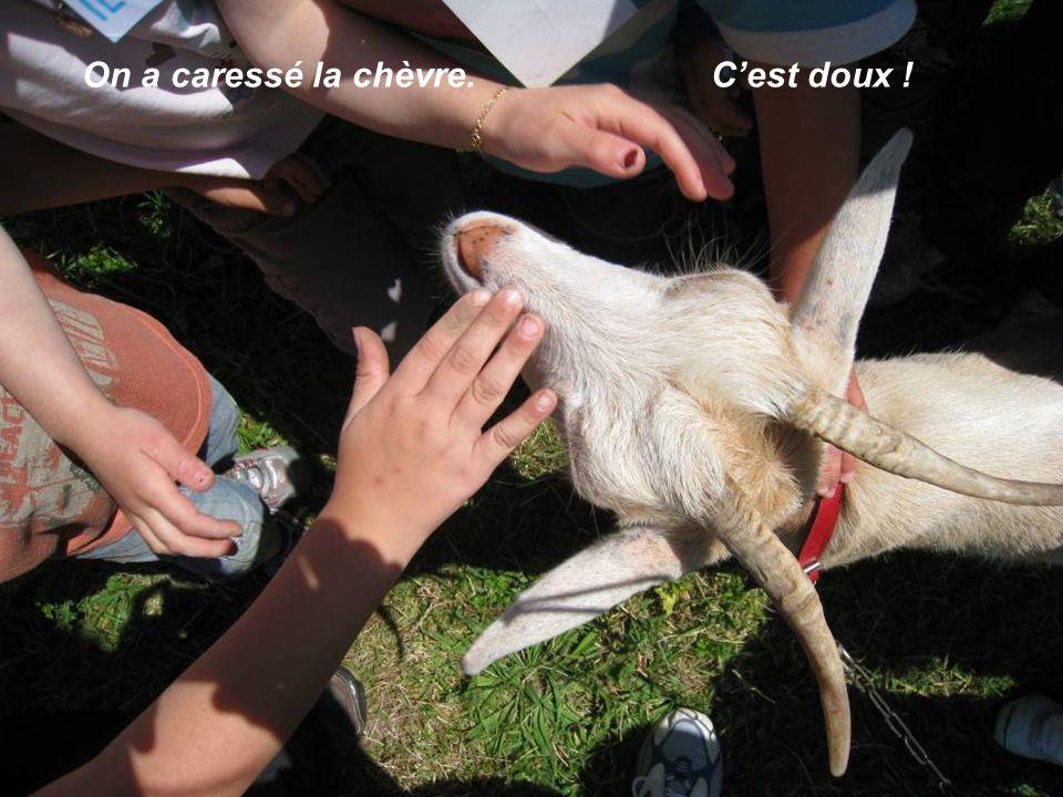 On a caressé la chèvre. C'est doux !