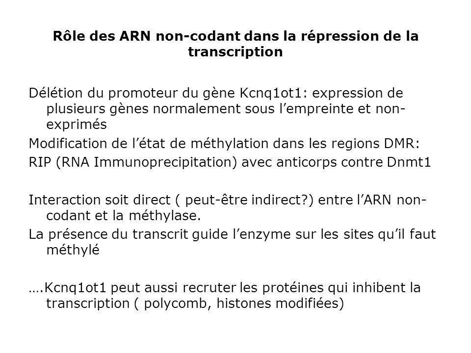 Rôle des ARN non-codant dans la répression de la transcription