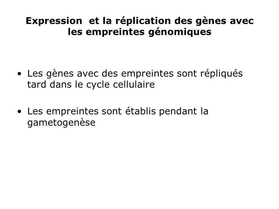 Expression et la réplication des gènes avec les empreintes génomiques