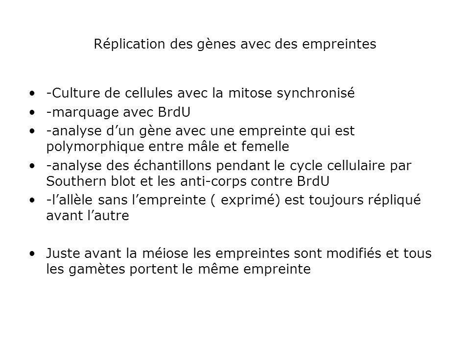 Réplication des gènes avec des empreintes