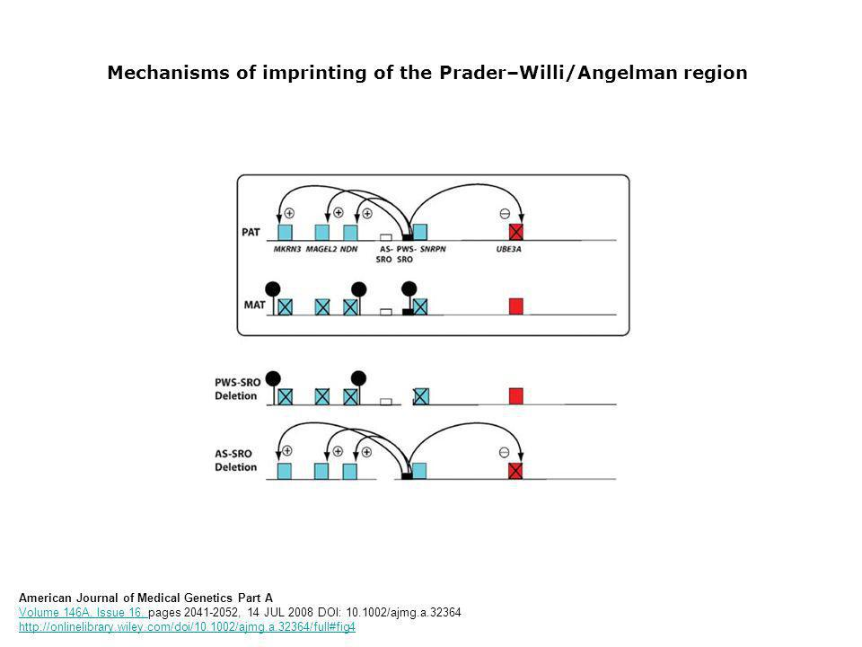 Mechanisms of imprinting of the Prader–Willi/Angelman region