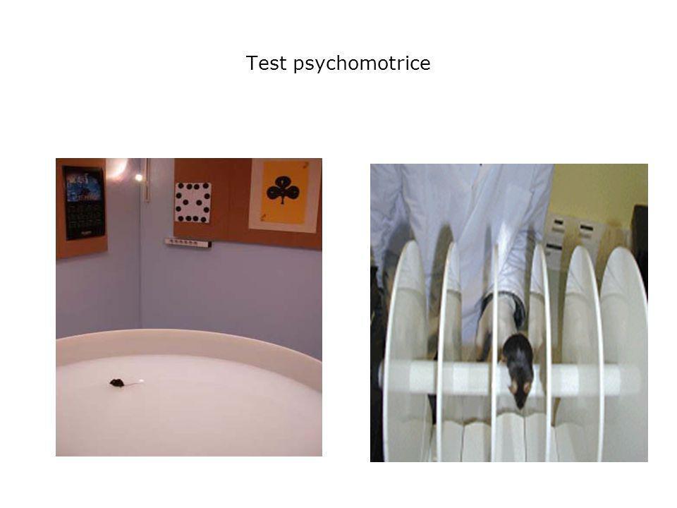 Test psychomotrice