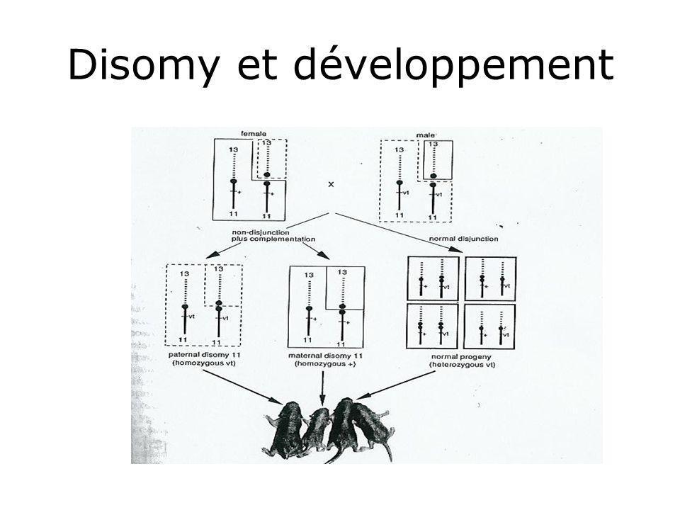 Disomy et développement