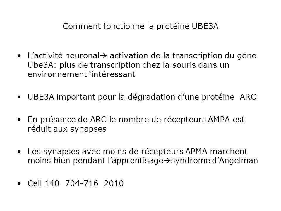 Comment fonctionne la protéine UBE3A